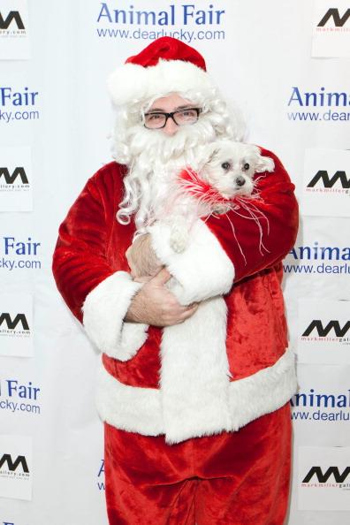 Собаки в рождественских нарядах на ежегодной ярмарке животных в Нью-Йорке. Фоторепортаж. Фото: Dario Cantatore/Getty Images