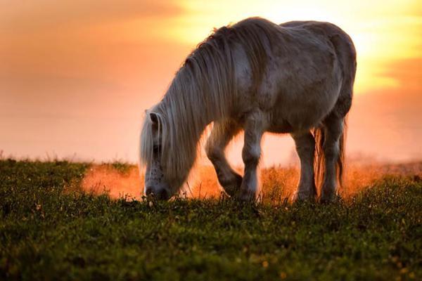 Природа и животные. Фото с сайта fresher.ru