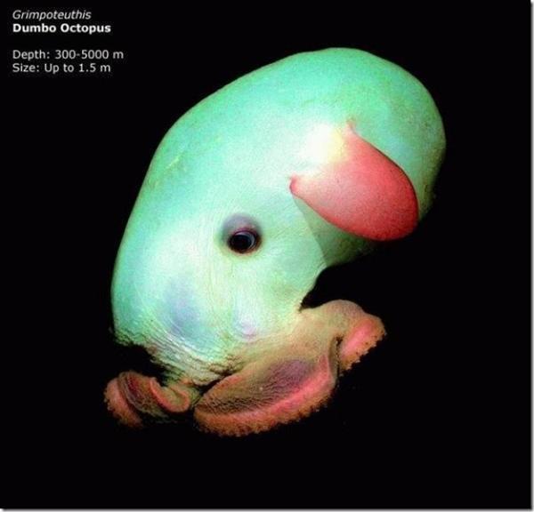 Живые существа, обнаруженные на дне Марианской впадины ранее. Фото с сайта lifeglobe.net