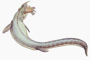 Мозазавр. Ученые считали, что динозавры вымерли 65 млн лет назад от удара метеорита. Эта версия подверглась сомнению. Отчего вымерли динозавры - остается загадкой. Фото с сайта dinozavr.org