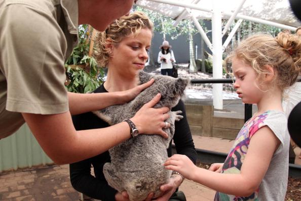 Ким Клейстерс в зоопарке в Брисбене. Фоторепортаж. Фото: TERTIUS PICKARD/AFP/Getty Images