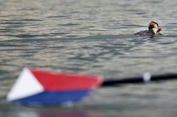 Фоторепортаж с соревнований по гребле в Амстердаме. Фото: Olaf Kraak / Getty Images