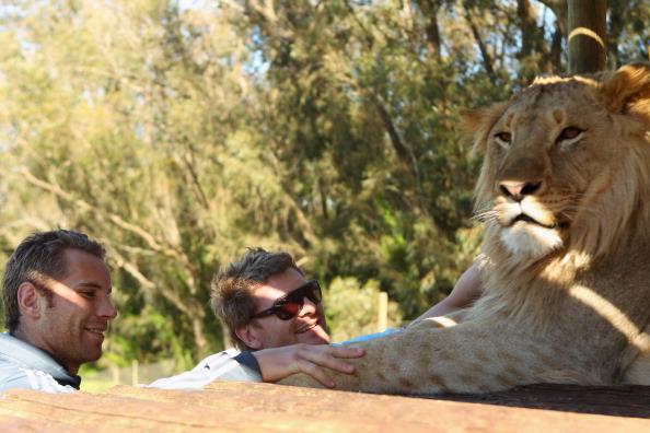 Фоторепортаж  о Сэме Уайтлоке и  Адаме Томсоне в Львином парке в Южной Африке. Фото:  Phil Walter/Getty Images