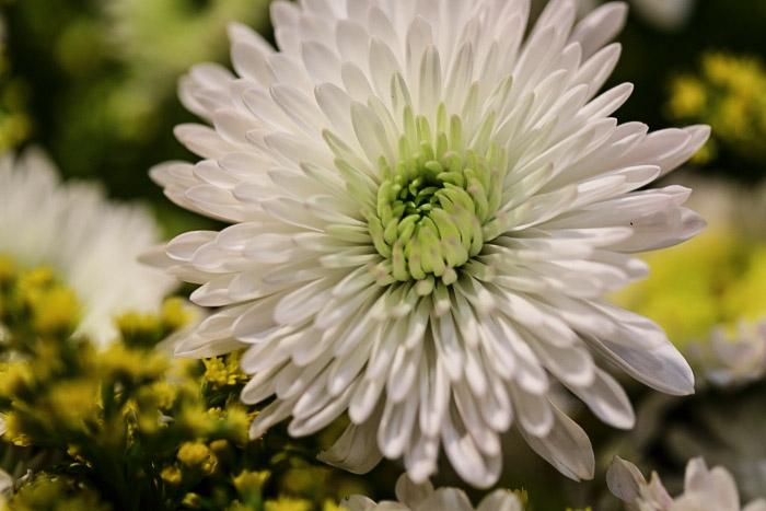 Цветы, сады и парки Сибири. Фото: Сергей Кузьмин/Великая Эпоха (The Epoch Times)