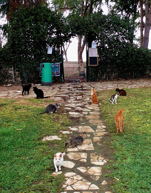 Кипр — это остров кошек. Фото: Анна Скороходова