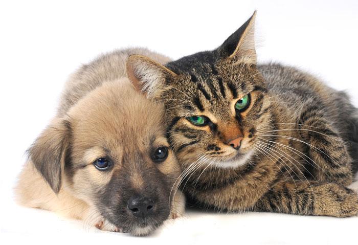 Большинство кошек и собак могут научиться жить в мире друг с другом. Фото: Vasyl Helevachuk/Photos.com