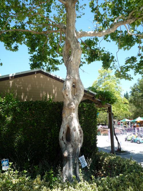 В Цирке деревьев Акселя Эрландсона представлены необычные формы деревьев семейства платановых - в парке. Фото: FASTILY/commons.wikimedia.org
