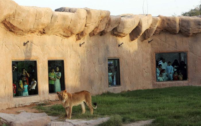В зоопарке Аль-Айна живет более 4000 животных и более 30% из 180 видов считаются исчезающими видами. Фото: KARIM SAHIB/AFP/Getty Images