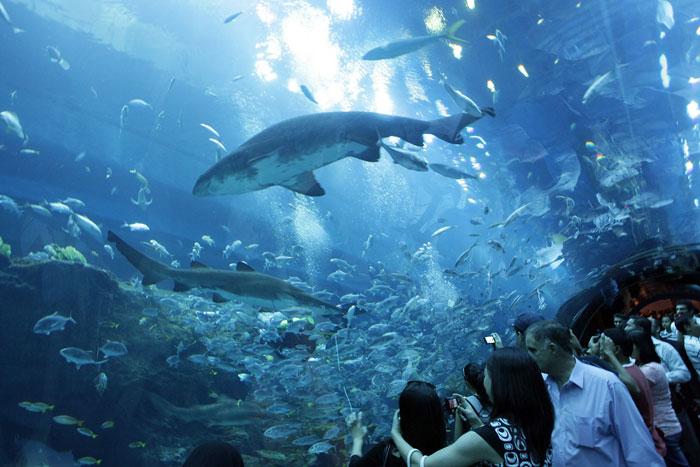 Аквариум в Дубай Молл - самый большой в мире аквариум. Фото: KARIM SAHIB/AFP/Getty Images