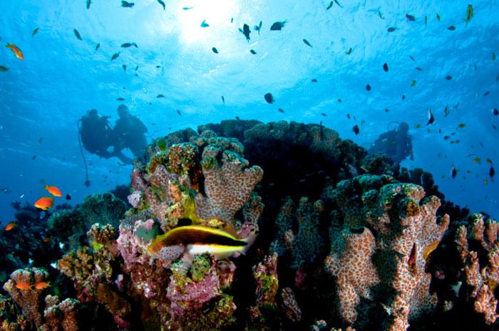 Дайвинг. Красное море, Хургада, Египет. Фото: Kadri Ates Evirgen/Photos.com