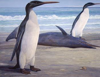 Изображение двух пингвинов Кэйруку (Kairuku) на берегу и дельфина Вэйпатия (Waipatia), лежащего на мели. Фото: Chris Gaskin/Geology Museum, University of Otago