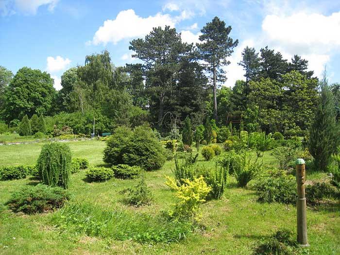 Ботанический сад Балтийского федерального университета им. И.Канта, Калининград. фото: Bars 23/commons.wikimedia.org