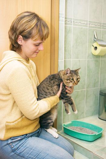 Кошку нужно приучить ходить в туалет туда, куда считает нужным хозяин. Фото: Irina Soloshenko/Photos.com
