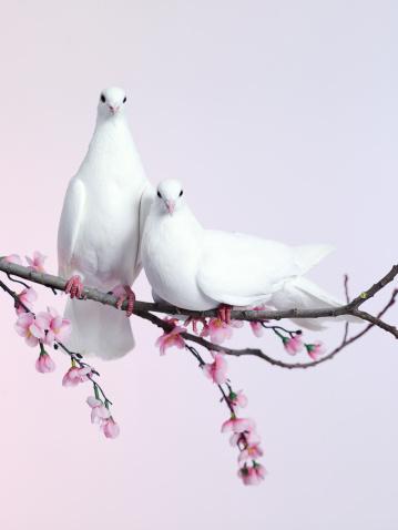 Ко Дню всех влюбленных... Фото: Getty Images