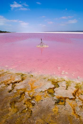 Розовое озеро Хиллер (Hillier), западная Австралия. Фото: robsonsarah/Photos.com