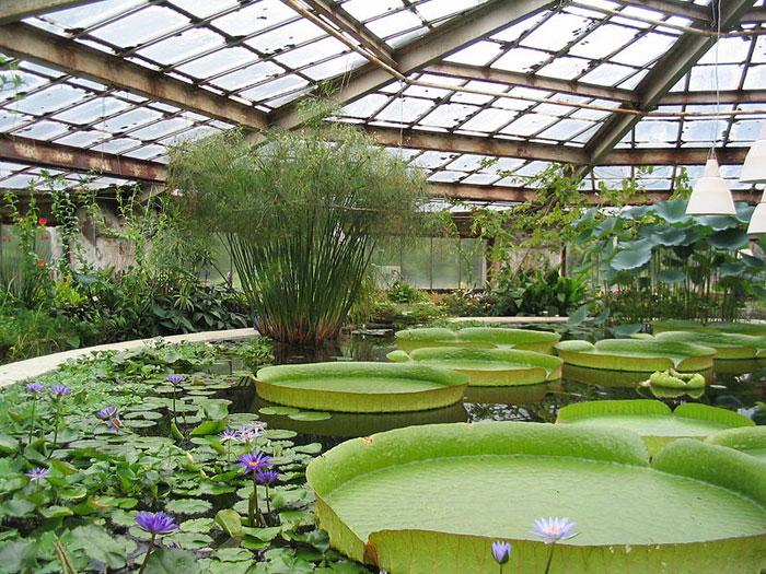 Ботанический сад Санкт-Петербурга, оранжерея водных растений. Фото: Владимир Иванов/commons.wikimedia.org