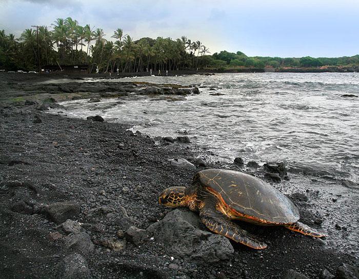 Пуналуу, Гавайи, США. Фото: Brocken Inaglory/commons.wikimedia.org