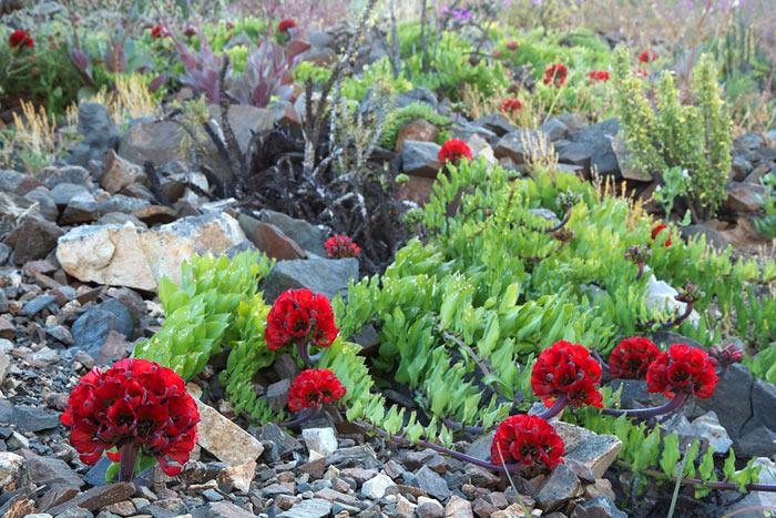 Растительность пустыни Атакама, Чили. Фото: ANTOINE LASSAGNE/AFP/Getty Images