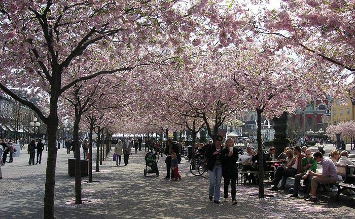 Кунгстрэдгорден — парк в центре Стокгольма, Швеция. Фото: Holger.Ellgaard/commons.wikimedia.org