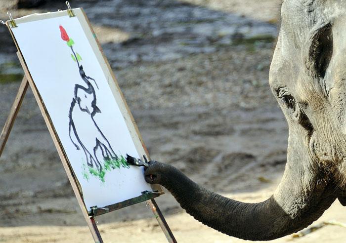 Слоны - символ и гордость Таиланда. Фото: PHILIPPE HUGUEN/AFP/Getty Images