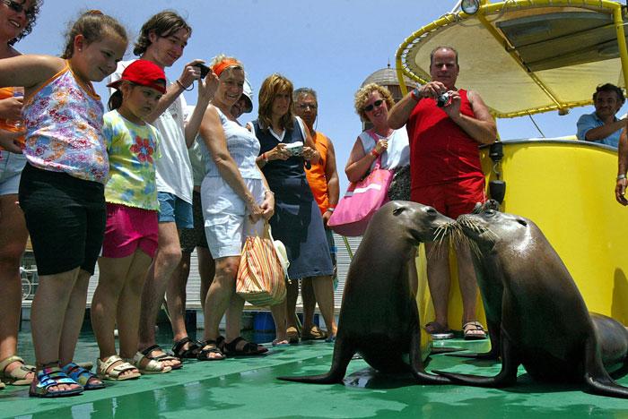 Туристы смотрят шоу морских львов, Эль-Кастильо, Испания. Фото: SAMUEL ARANDA/AFP/Getty Images