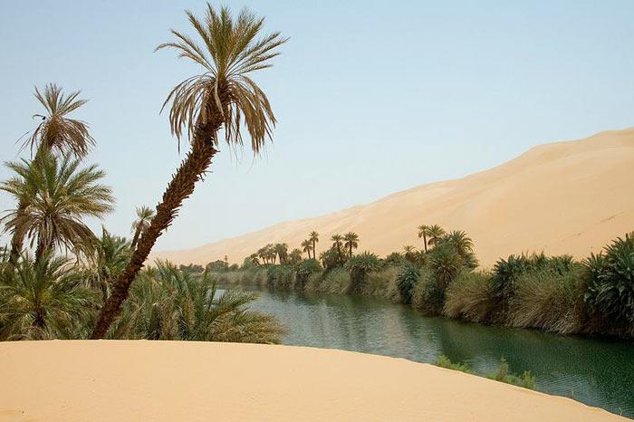 Пальмы в оазисе Убари, пустыня Сахара, Тунис. Фото: Luca Galuzzi/commons.wikimedia.org