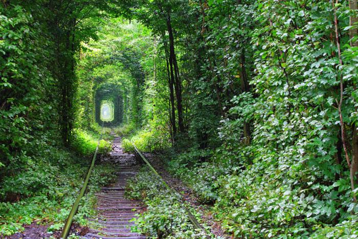 «Тоннель любви» на Украине: место, где сбываются мечты. Фото: tverkhovinets/Photos.com