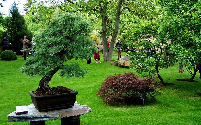 Ботанический сад, Прага, Чехия. Фото: Krvesaj/commons.wikimedia.org