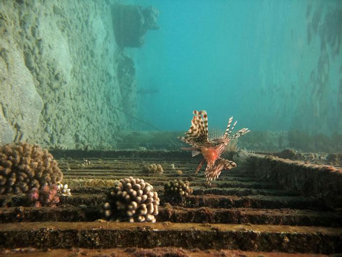 Коралловые рифы, Турция. Фото: Elisei Shafer/Photos.com