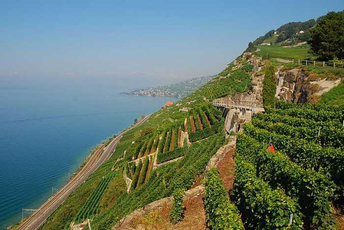 Террасовые виноградники Лаво в Швейцарии растянулись вдоль побережья Женевского озера. Фото: Ricardo Hurtubia/commons.wikimedia.org