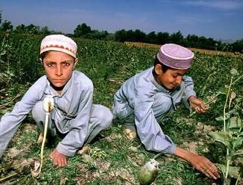В Афганистане производилось более 92% всего героина в мире. Фото с cripo.com.ua