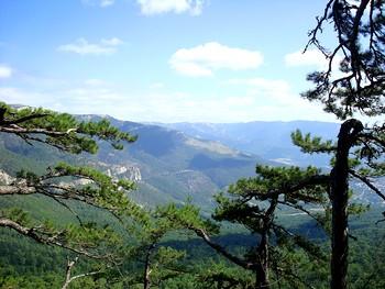 Ялтинский горно-лесной природный заповедник. Фото: dic.academic.ru