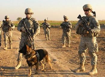 Американские солдаты в Ираке. Фото: flickr.com