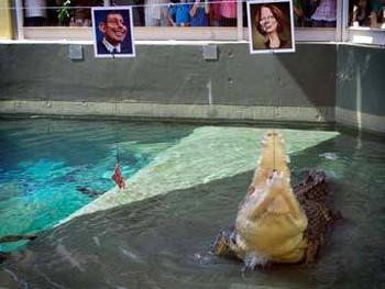 В Австралии появился крокодил-предсказатель по кличке Гарри. Фото с abc.net.au