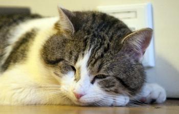 Утечку газа обнаружила кошка. Фото: Mark Large - WPA Pool / Getty Images