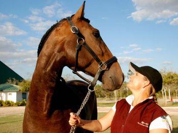 Лошадь Луситано: Тренер Хэзер Бендер демонстрирует великолепную лошадь до начала аукциона. (Мириам Моран)