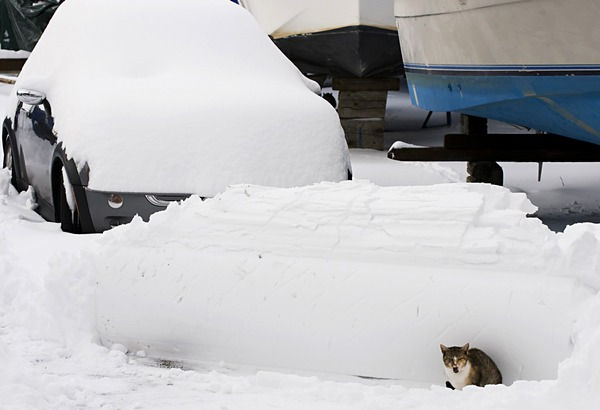 Снежный шторм прошёл на территории десятков штатов США: пять человек погибли. Фото: DON EMMERT/AFP/Getty Images