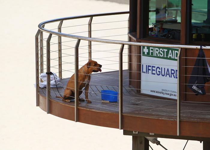 В Австралии стоит аномальная жара. Фоторепортаж. Фото: Marianna Massey/Getty Images
