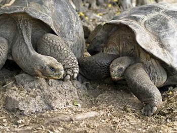 Черепахи Польди и Биби в браке 115 лет. Фото с сайта sasstag.com