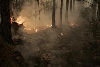 В Португалии горят сотни гектаров леса. Фото: Oscar Sosa/Getty Images