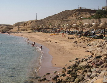 Серб убил  акулу на  египетском курорте Шарм-эль-Шейх. Фото: KHALED DESOUKI/AFP/Getty Images