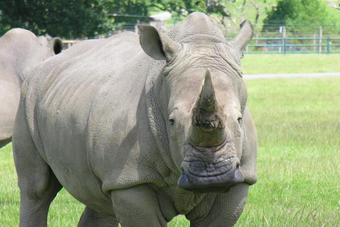 Индия: редкие носороги получат защиту от браконьеров. Фото с сайта flickr.com