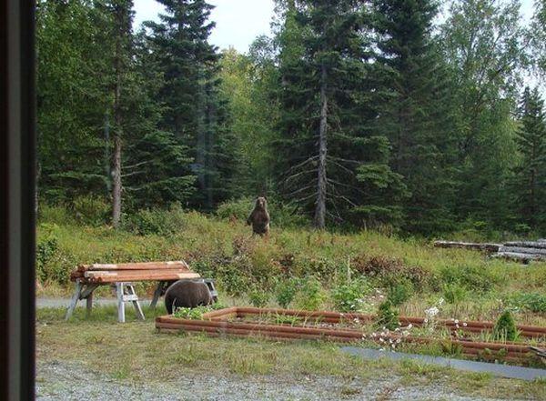Медведи возле дома. Фото: Вера МЕССЕРА/Великая Эпоха (The Epoch Times)