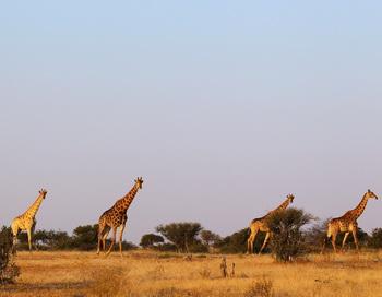Гигантские запасы воды обнаружены в недрах африканского континента. Фото: Gameror Spencer/Getty Images News