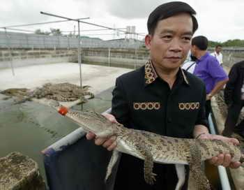 В Таиланде вместо сторожевых собак завели крокодилов.  Фото: PORNCHAI KITTIWONGSAKUL/AFP/Getty Images