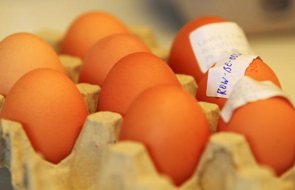 Исследование зараженных яиц в лаборатории, 5 января 2011, Берлин, Германия. Фото: Sean Gallup/Getty Images