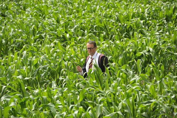 Фоторепортаж о портрете Гари Поттера на кукурузном полею Фото:  Bethany Clarke/Getty Images