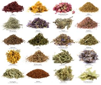 Лекарственные травы в ЕС запретили продавать. Фото с herbalmusings.com