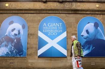 Брайан Янг, художник, в Эдинбургском зоопарке помогает с последними приготовлениями к приезду гигантских панд Тянь-Тянь и Ян Гуан, Эдинбург, Шотландия. Две панды из Китая будут жить в Великобритании в течение 17 лет. Фото: Jeff J Mitchell/Getty Images