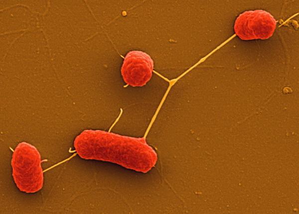Фоторепортаж о вспышке кишечной инфекции в Германии. Фото: Manfred Rohd/ HZI/Getty Images